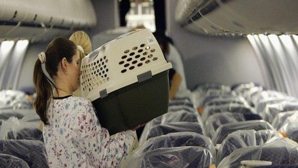 Tips Membawa Hewan Peliharaan Dengan Pesawat Terbang Airport Id